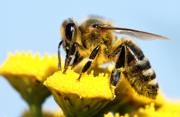 uk scientists to create autonomous robot with bee brains